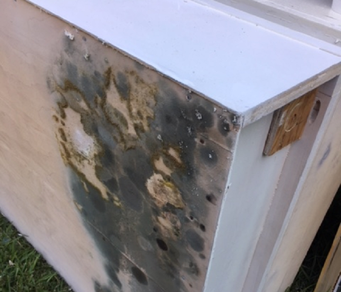 Why does mold grow? Before